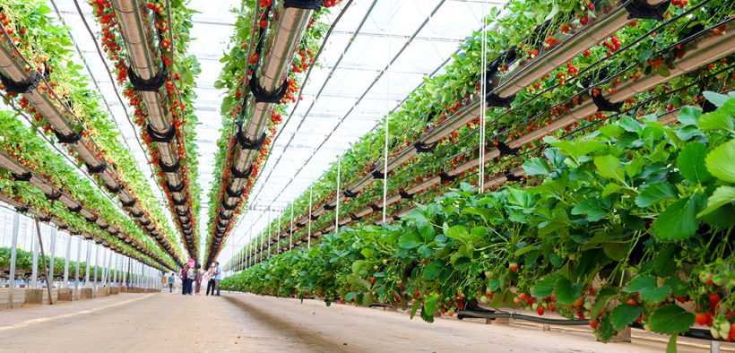 Image of an indoor growing facility for Agricultural and Natural Manufacturing Technology blog post