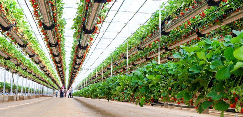 Image d'en-tête de technologie agricole et naturelle-fraises d'intérieur