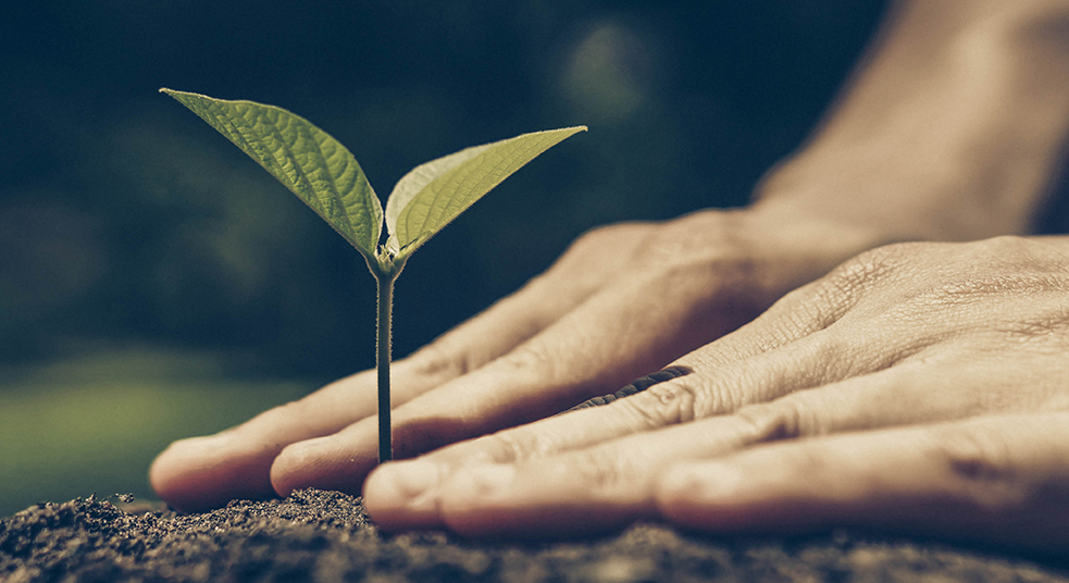 Image of hands securing a plant which has sprouted into the soil for Canada 2030 Scan of Emerging Issues Sustainability blog post