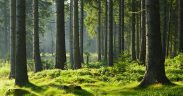 Image of sunlit forest used as header for What If Consumers Took More Extreme Measures to Help Drive Sustainable Behaviour blog post